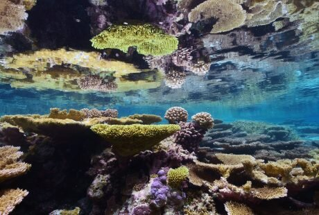 Global Fishing Watch Marine Protected Areas Palmyra
