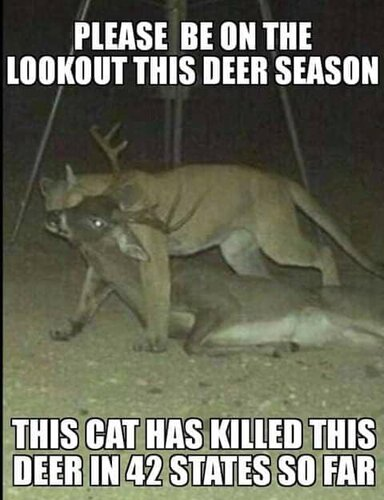 Image may contain: text that says 'PLEASE BE ON THE LOOKOUT THIS DEER SEASON THIS CAT HAS KILLED THIS DEER IN 42 STATES SO FAR'