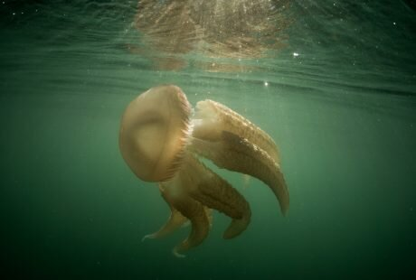 Lou Luddington sailing jellyfish ocean