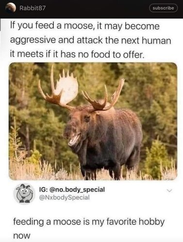 Image may contain: text that says 'Rabbit87 subscribe If you feed a moose, it may become aggressive and attack the next human it meets if it has no food to offer. IG: @no.body_special dy_special @NxbodySpecial feeding a moose is my favorite hobby now'