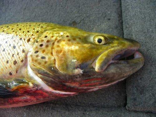 fishingforBrowns015.jpg