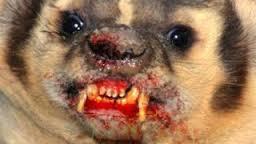 rabid weasel.jpg