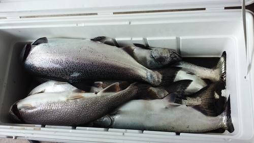 fish.thumb.jpg.f1ff46c64511ab8ea836e75512370bb3.jpg