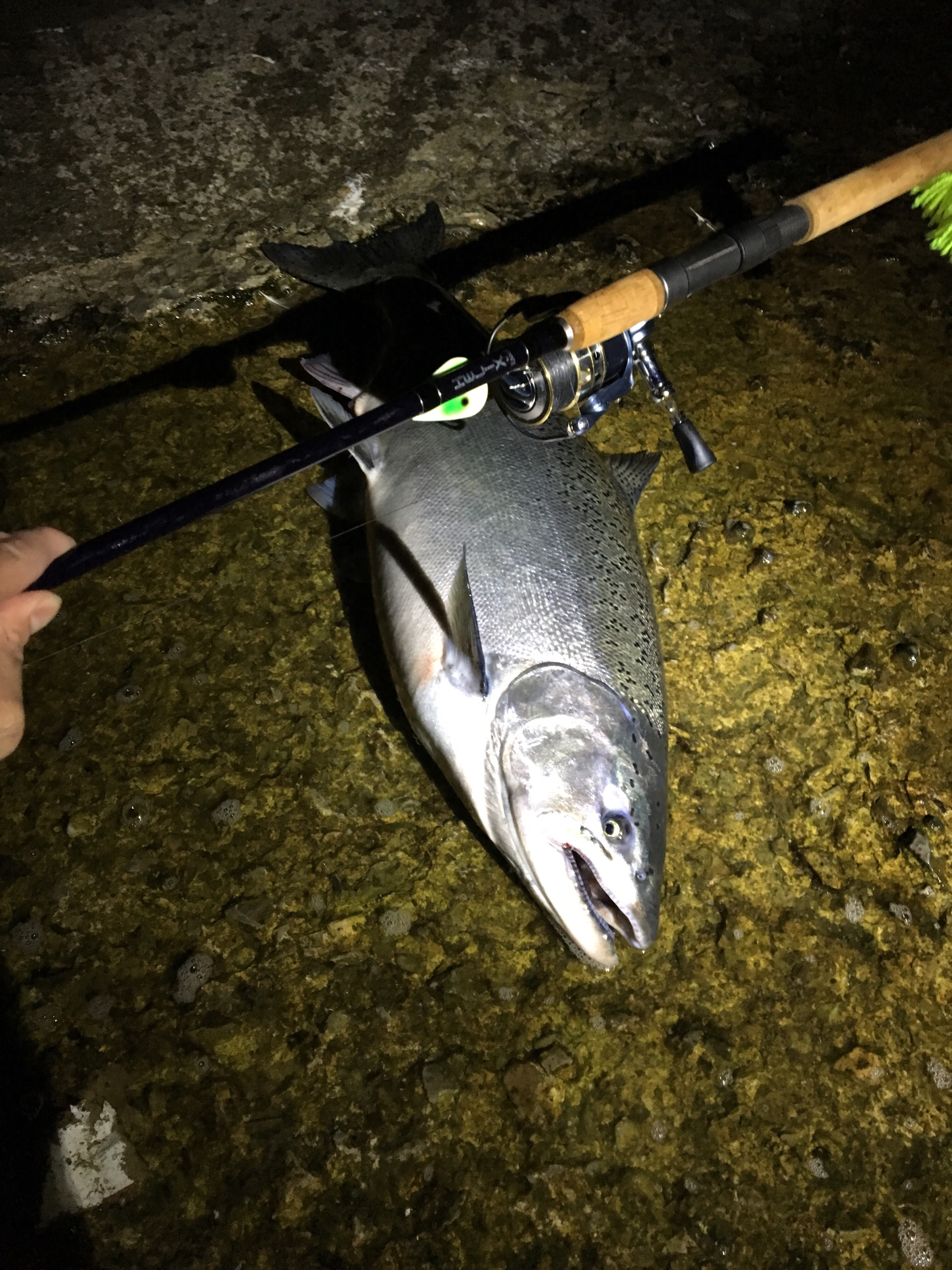 Share your best catch es for the 2017 fishing season for Pa fishing seasons and limits 2017