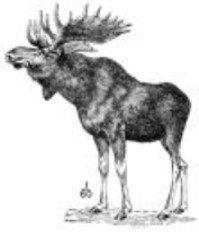 Moose b.jpg