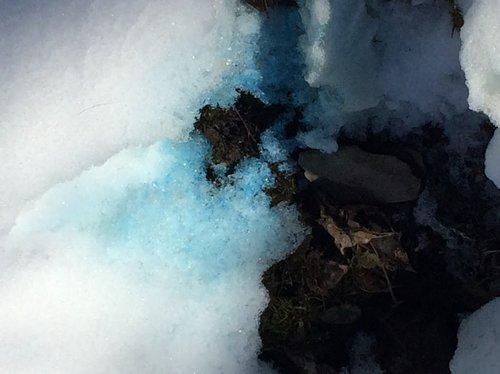 Blue Pee.jpg