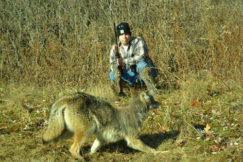 coyote2(1).jpeg