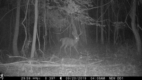 Riga 9-20-19 buck pine.JPG