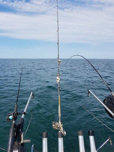 rod and reel.jpg