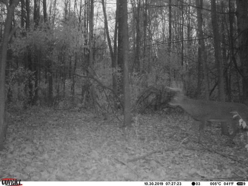 rush buck sneak 10-30-19.JPG