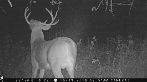 big buck mendon 10-13-19 251 am rear.JPG
