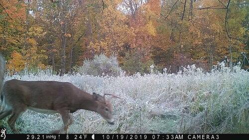3rd buck 10-19-19 me.JPG