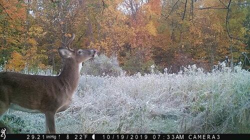 Buck 2nd 10-19-19 me.JPG