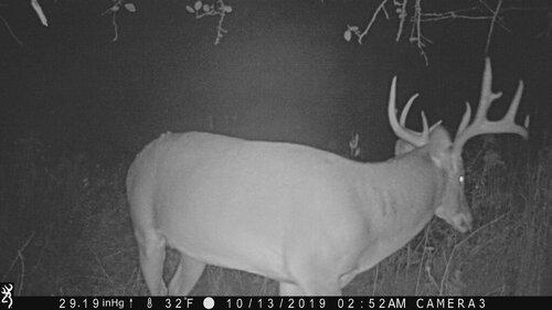 Big Buck Mendon 10-13-2019 252am.JPG