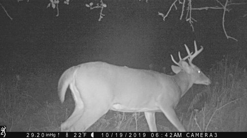 Buck 10-19-19 642 me.JPG