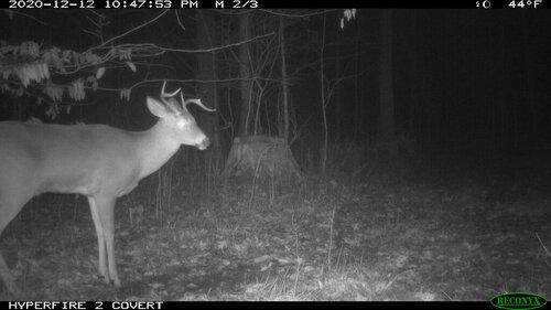 goofy buck.JPG